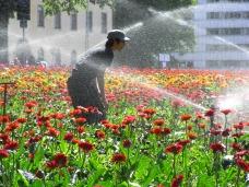 A flower installation Turku, Finland