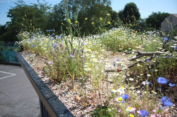 content-WGRC2012-Greenroof1-DustyGedge