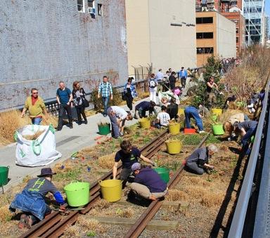 Highline park planting