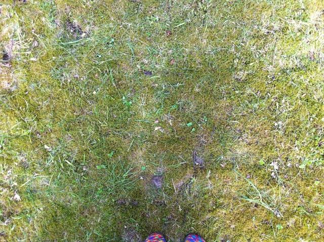 Jonathan klippte gräset - mossan